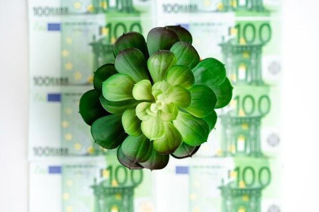 Fleur succulente verte se dresse sur les factures vertes en euros