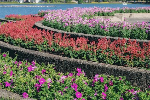 Fleur sur terrain avec coloré.