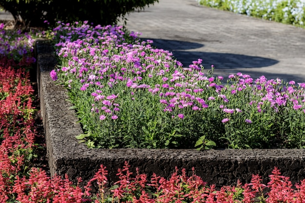 Fleur sur le terrain dans le jardin.