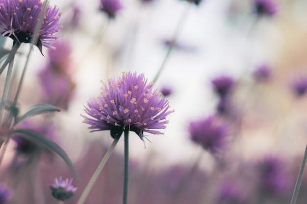 Fleur de tête en hiver.