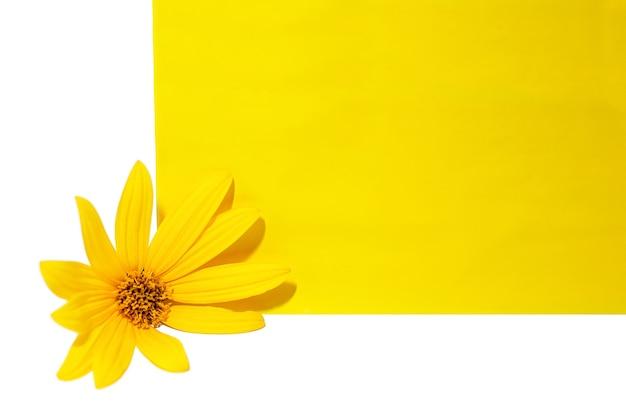 Fleur de topinambour sur une feuille de papier jaune isoler sur fond blanc