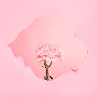 Fleur à travers un trou de papier
