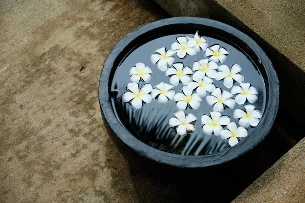 Fleur tropicale blanche de frangipanier dans l'eau de bol