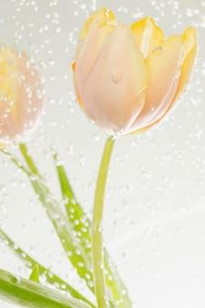 Fleur de tulipe avec des bulles d'air dans un bain-marie