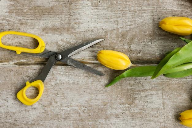 Fleur de tulipe jaune et ciseaux ouverts sur fond en bois. vue de dessus sur le lieu de travail avec outil de serre et fleurs de printemps. matériel de décoration, fleuriste, décorateur, concept fait main.