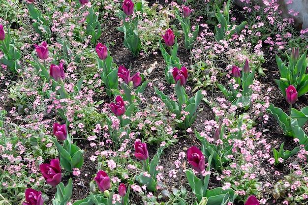 Fleur de tulipe marron rouge foncé avec arrière-plan flou se bouchent.
