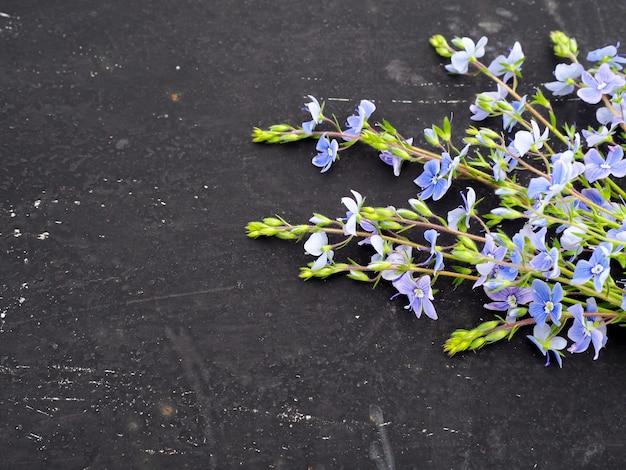 Fleur de veronica officinalis sur fond noir