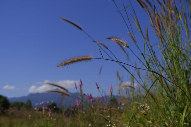 Fleur de verre dans la nature sur ciel bleu