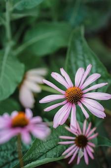 Fleur violette et blanche dans l'objectif tilt shift