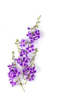 Fleur violette isolée