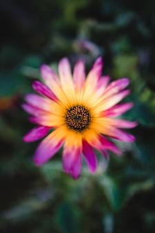Fleur violette et jaune dans l'objectif tilt shift