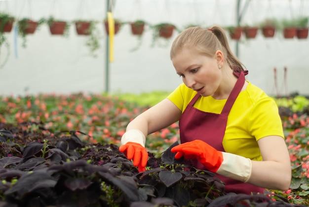 Fleuriste féminin s'occupant des plantes d'intérieur dans le jardin d'hiver