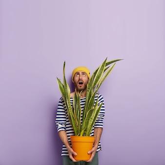 Un fleuriste masculin de race blanche impressionné tient un pot avec une plante d'intérieur, concentré vers le haut avec une expression faciale surprise, occupé à faire le ménage