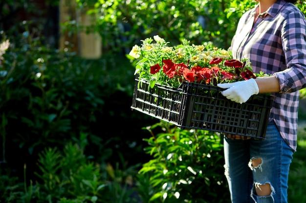 Fleuriste tenir la boîte pleine de fleurs de pétunia.