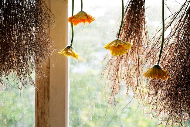 Des fleurs accrochées à une fenêtre