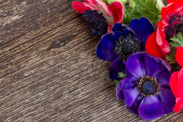 Fleurs d'anémone bleue sur fond de bois