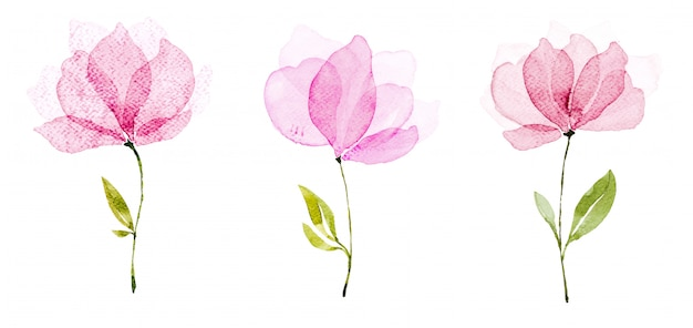 Fleurs d'aquarelle