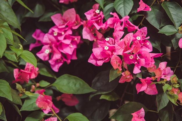 Fleurs sur l'arbre.