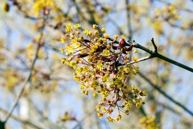Fleurs d'arbres