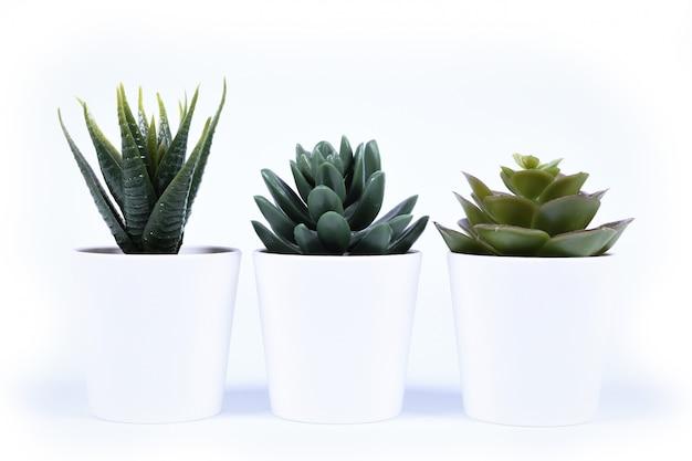 Fleurs artificielles herbe forme différente dans un pot isolé sur fond blanc se bouchent