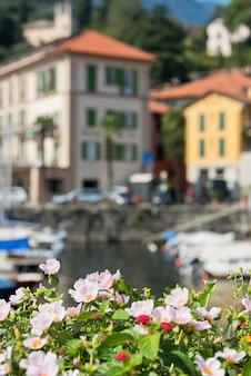 Fleurs au bord du lac de côme, en italie