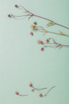 Fleurs avens sauvages sur la surface du papier