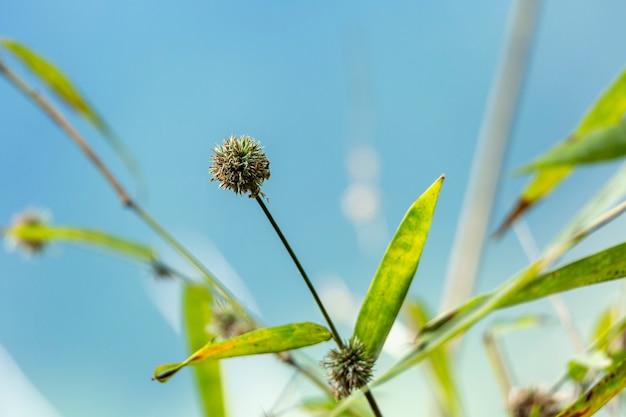 Les fleurs de bambou