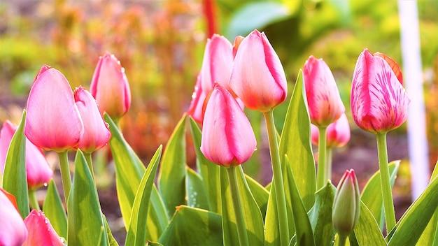Fleurs et beaux fonds naturels