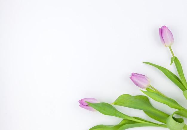Fleurs de belle tulipe au coin du fond blanc