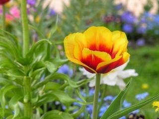 Fleurs à berlin