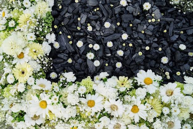Fleurs blanches automnales avec charbon noir. vue de dessus.