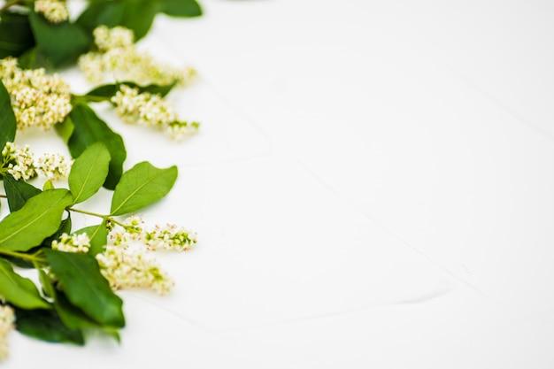 Fleurs blanches sur béton blanc