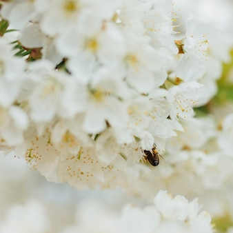 Fleurs blanches sur une branche