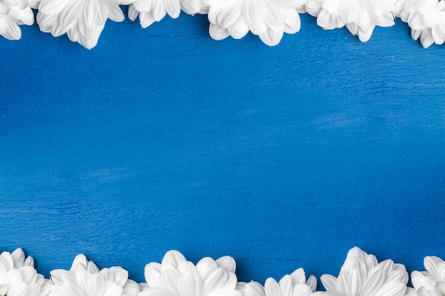 Fleurs blanches, chrysanthèmes sur fond bleu.