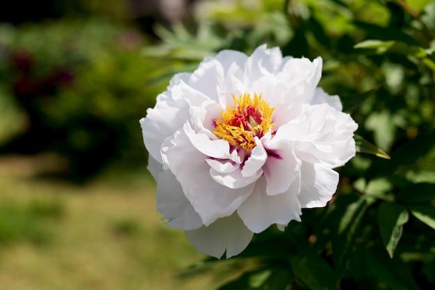 Fleurs blanches dans le jardin