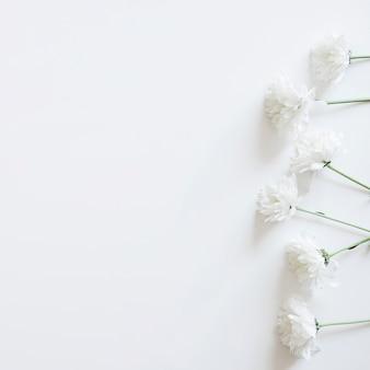 Fleurs blanches à droite pour le printemps