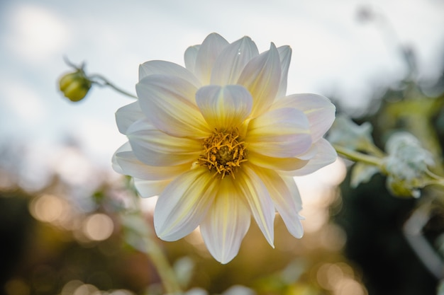 Fleurs blanches en fleur