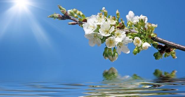 Fleurs blanches en fleurs dans une branche avec un ciel bleu et un fond de lumière du soleil