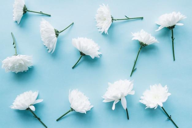 Fleurs blanches sur un fond bleu clair