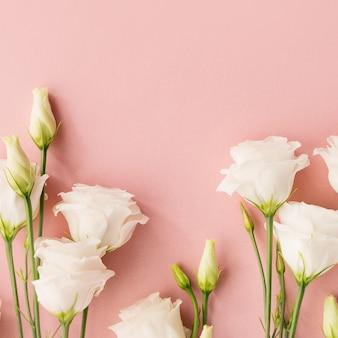 Fleurs blanches sur fond rose
