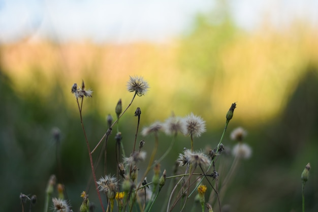 Des fleurs blanches et jaunes d'épines poussent dans un champ à l'ombre