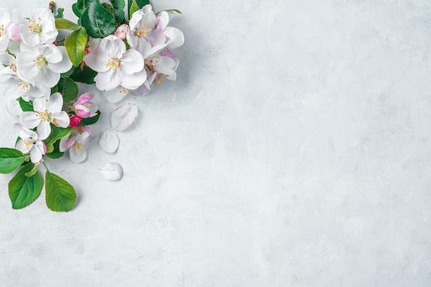 Fleurs blanches sur un mur gris avec espace pour copier. vue de dessus. fond floral.