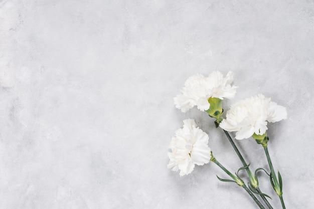 Fleurs blanches d'oeillets sur la table