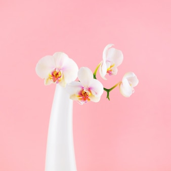 Fleurs blanches de phalaenopsis dans le vase en verre