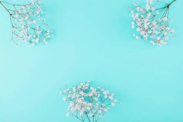 Fleurs blanches vue de dessus
