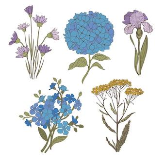Fleurs bleues sur fond blanc. fleurs de vecteur hortensia iris ne m'oublie pas