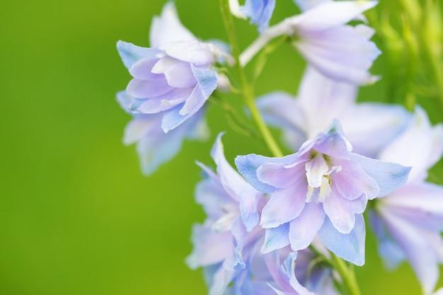 Fleurs bleues sur fond vert