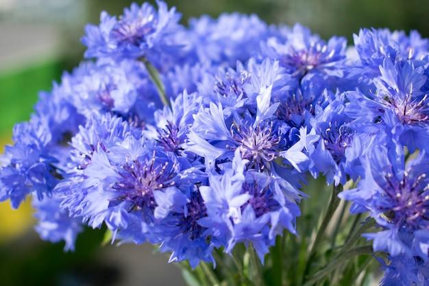 Fleurs de bleuet avec un arrière-plan flou vert.