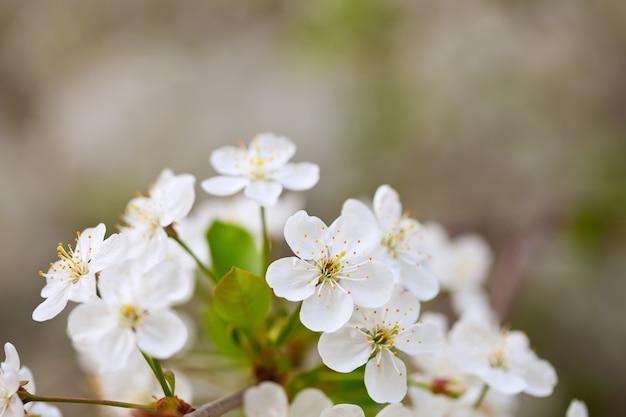 Fleurs branche d'arbre avec copyspace