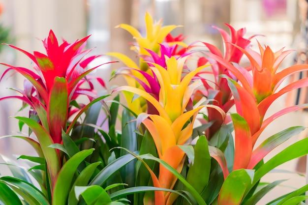 Fleurs de broméliacées en fleurs colorées à l'intérieur, flou